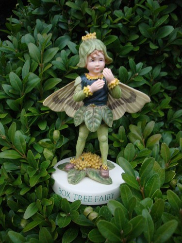 Flower fairy Box tree.